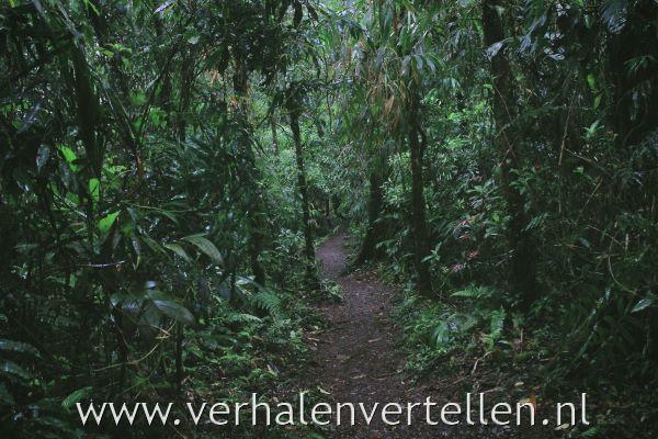 een goede kaart voor een pad door de jungle