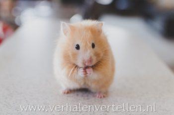 verhalen vertellen: improviseren met muizen